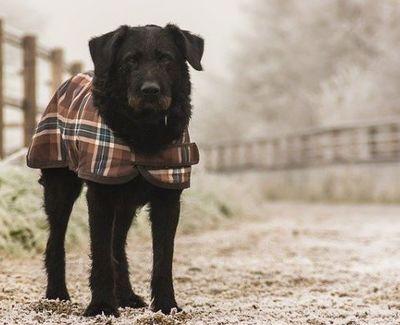 14 astuces pour protéger du froid votre animal de compagnie