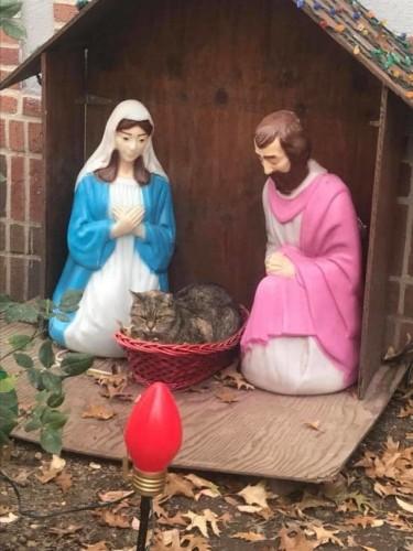 Insolite : Un chat s'invite dans une crèche de Noël !   Blog