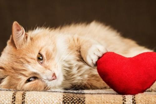 jouet chat seul