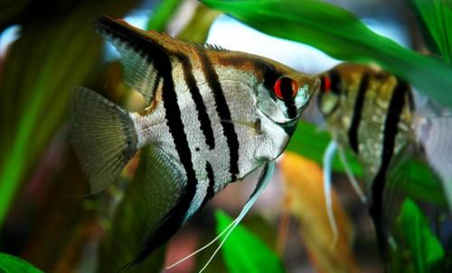 Comment Se Passe La Reproduction En Aquariophilie Blog