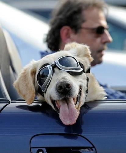 comment pr parer et bien vivre ses vacances avec son chien blog. Black Bedroom Furniture Sets. Home Design Ideas