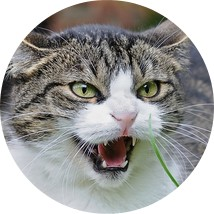 Comment savoir si mon chat a des puces ? - Blog