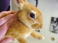 Comment avoir un lapin en bonne sant blog for Avoir un lapin a la maison