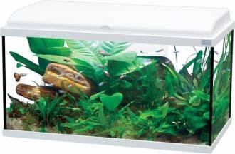 aquarium 96L
