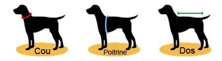 illustration mesure chien