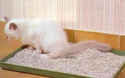 Comment s'occuper d'un chaton non-sevré ? - Blog