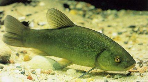 Quels poissons choisir pour un bassin d 39 ext rieur blog for Poisson pour mare