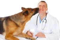Quels sont les principaux métiers animaliers ?