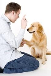 Qu'est ce qu' un éducateur canin ? - Blog