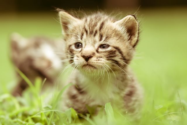 éducation chats