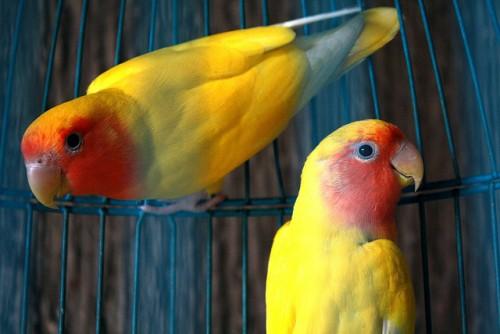 peut-on mettre tous les types d u0026 39 oiseaux ensemble