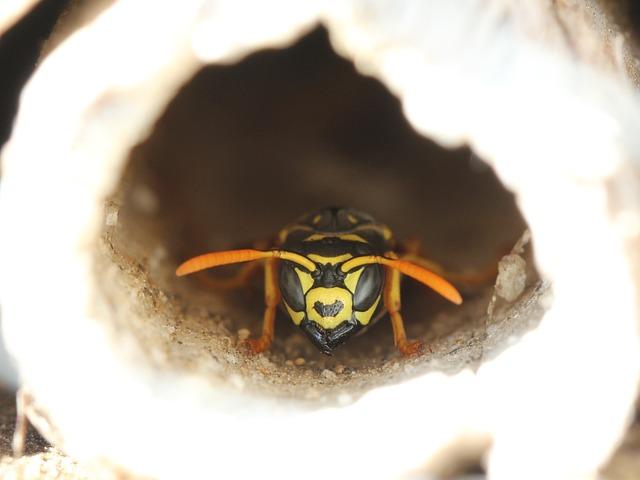 hotel-insectes-jardin