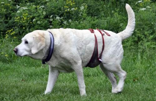 Quelles sont les maladies du chien âgé ? - Blog