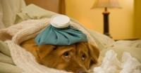 L'homéopathie en médecine vétérinaire : est ce que ça marche ?