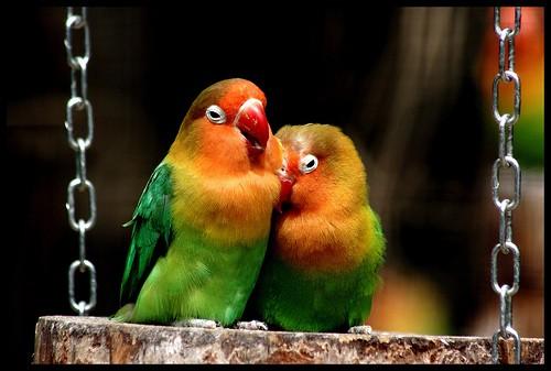 amour oiseau rencontre site