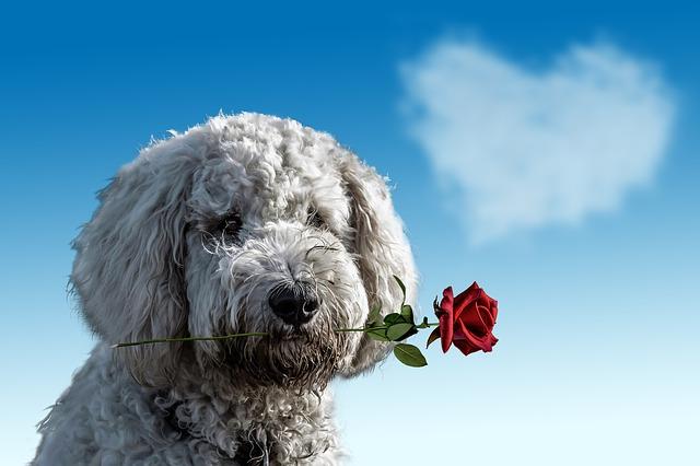 Site de rencontre pour chiens - Oh ! Pacha