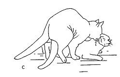 Comment Se Passe La Reproduction Chez Le Chat Blog