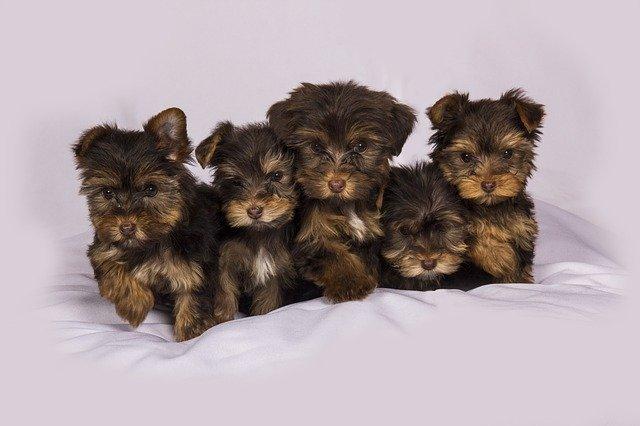 L'Angleterre met fin à la vente de chiens et chats en animalerie