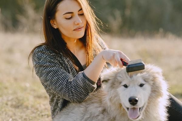 Brosser un animal