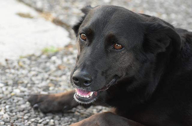 Grattage, prurit et démangeaisons du chien : causes et ...