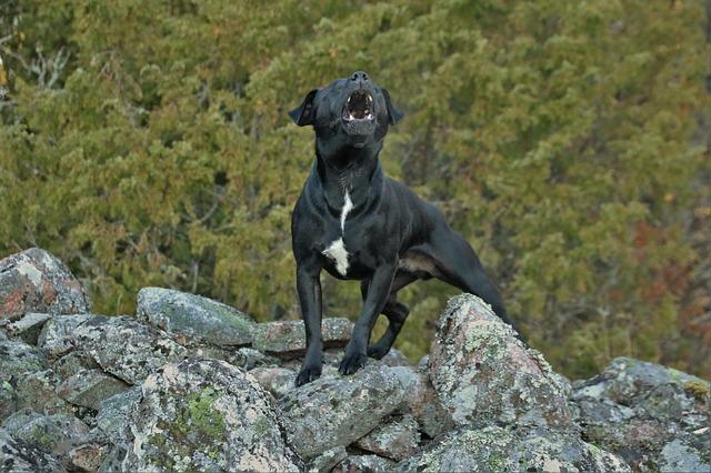 Comprendre les aboiements d'un chien : décryptage