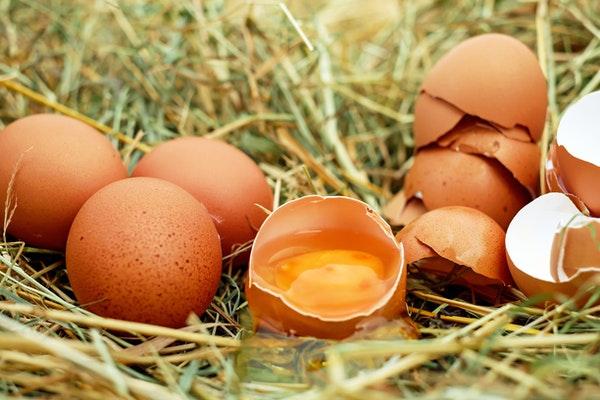 Pourquoi mes poules pondent des œufs mous ?