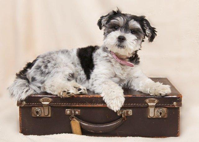 Faire garder son animal de compagnie cet été ?