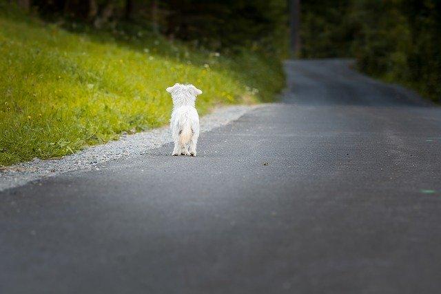 Partir en vacances avec son animal de compagnie : c'est possible !
