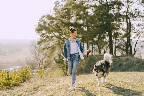 Apprendre à un chien à marcher en laisse