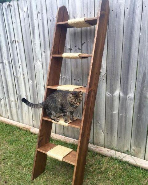 Arbre à chat avec échelle