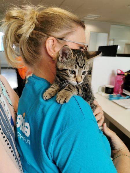 Avoir un chat : 6 bénéfices pour sa santé