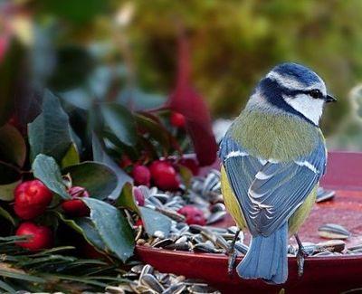 Comment bien nourrir les oiseaux sauvages ?