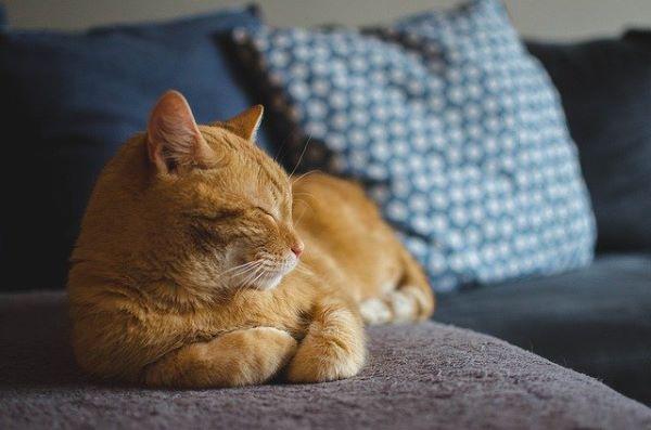 Le rhume du chat : c'est quoi ?