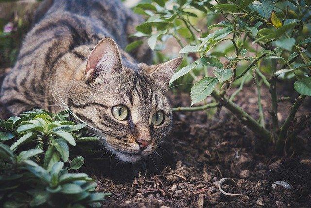 Les Phéromones du Chat : c'est quoi ?