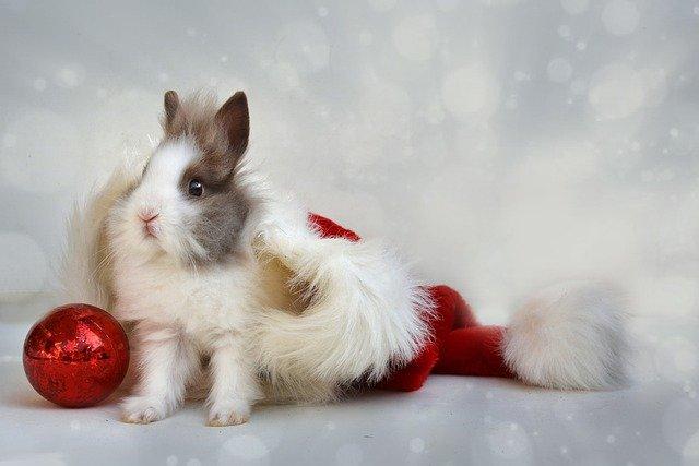 Offrir un lapin nain pour Noël : comment bien s'équiper ?