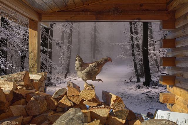 6 conseils pour protéger mes poules l'hiver