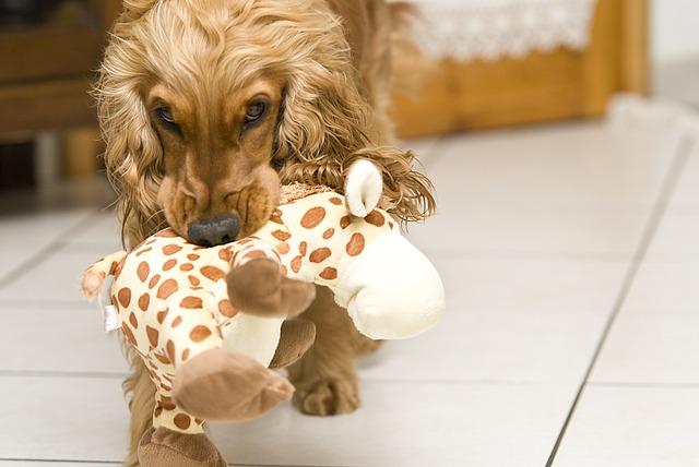 Comment jouer avec son chien dans la maison ? Mode d'emploi