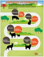 Urgences vétérinaires en image