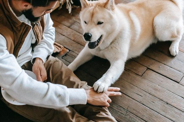 Faciliter la digestion de mon chien : processus, conseils et explications