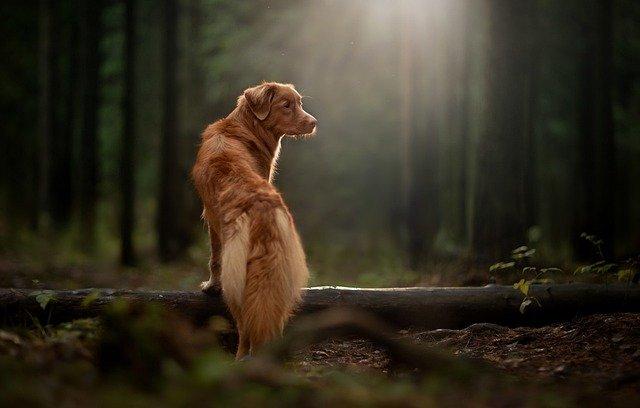 Borréliose : Soigner la maladie de Lyme chez le chien