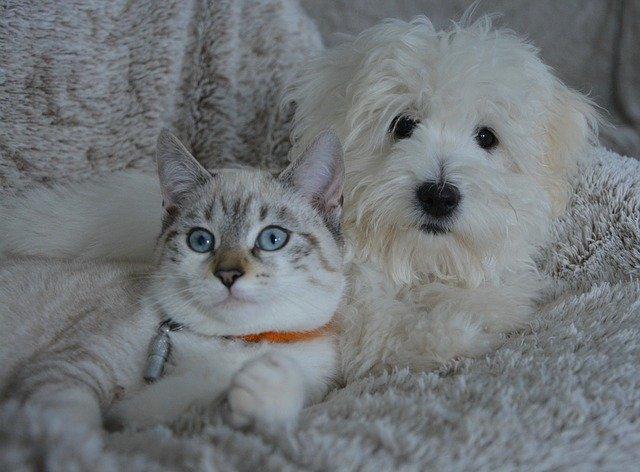 DIY : 6 recettes de produits antiparasitaires pour chien et chat