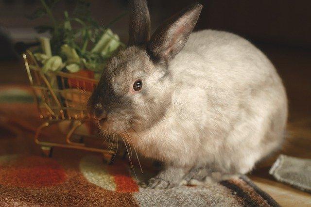 DIY : 17 fruits et légumes bons pour mon lapin de compagnie