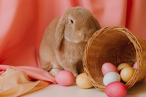 Pâques : l'origine de nos animaux de compagnie en chocolat