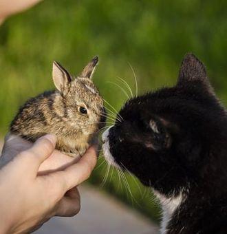 Quelle litière chat pour lapin non toxique ?