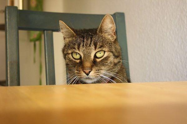 Quelle nourriture humide pour chat choisir ? Le concept HFG