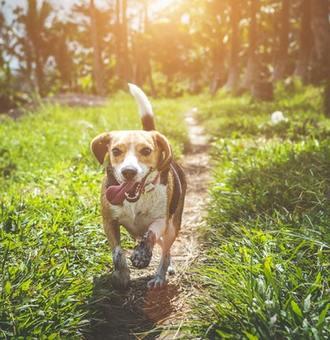 Comment empêcher mon chien de fuguer ? 9 bonnes pratiques