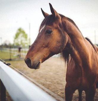 Dermite estivale du cheval : comment bien la soigner ?