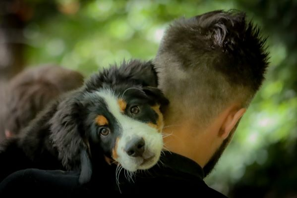 Association pour la protection des animaux : adoption