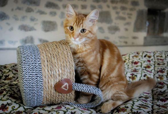 Association pour la protection des animaux : chat
