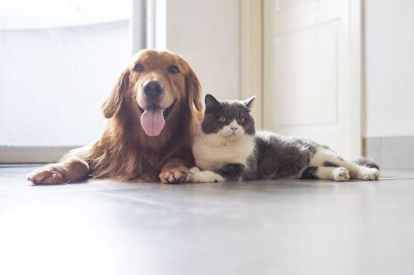 DIY : 5 idées anti puce maison pour l'habitat du chien et du chat